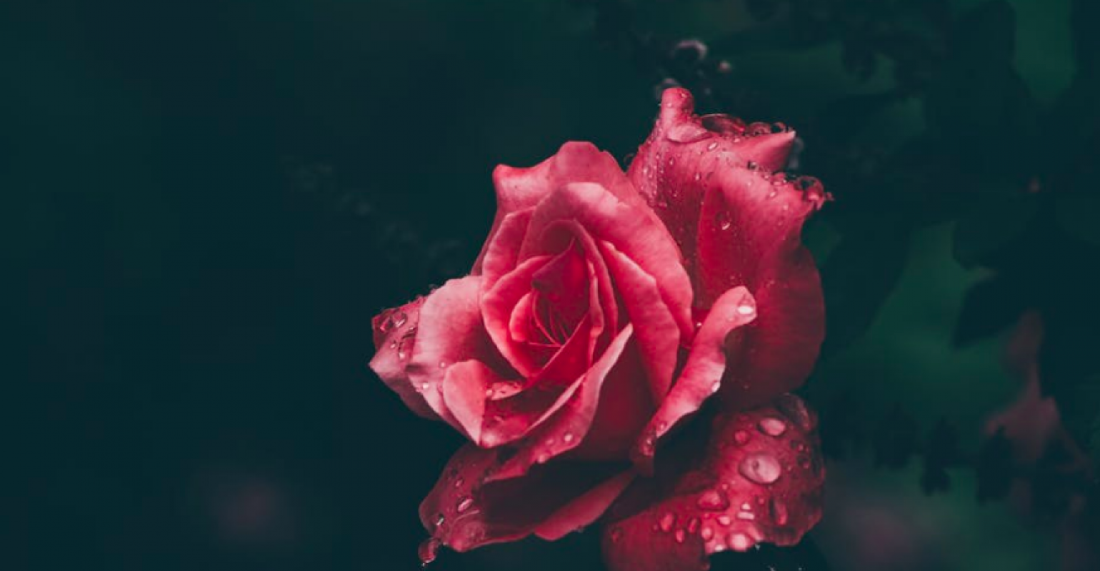 Hadoop Architecture: Is the Bloom off the Rose? | IT Pro