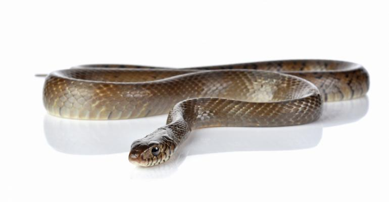 snake with white background
