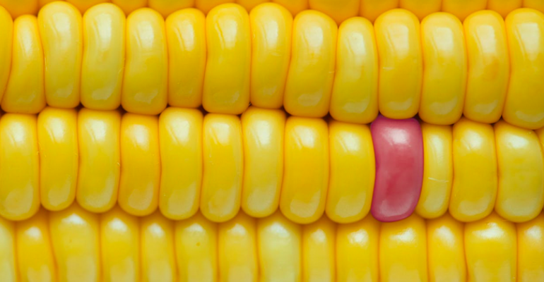 Yellow Corn Kernels with One Red Kernel.png