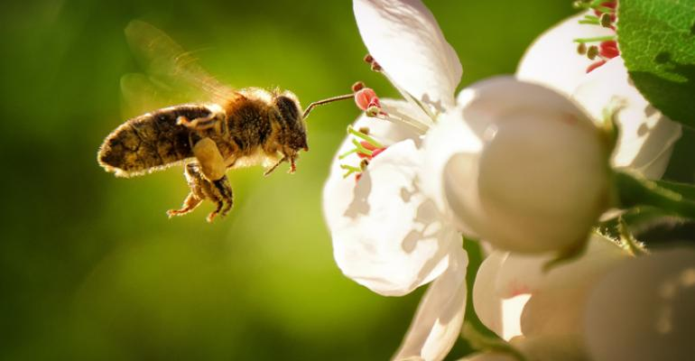 iot-in-agriculture-bees.jpg