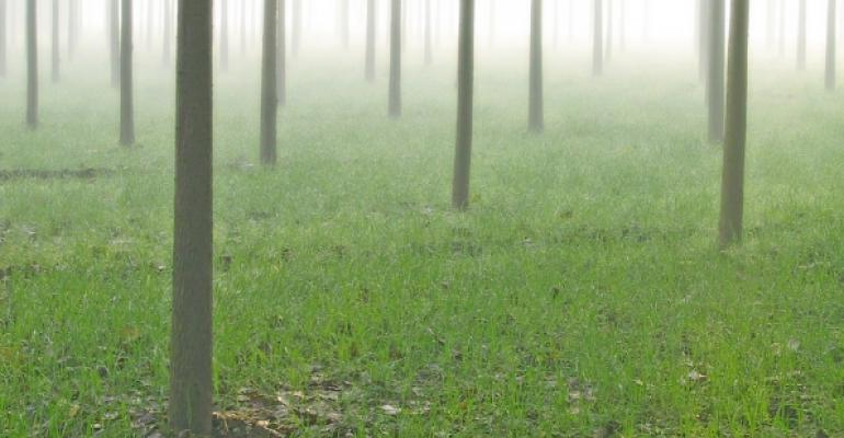 small tree trunks in a foggy area