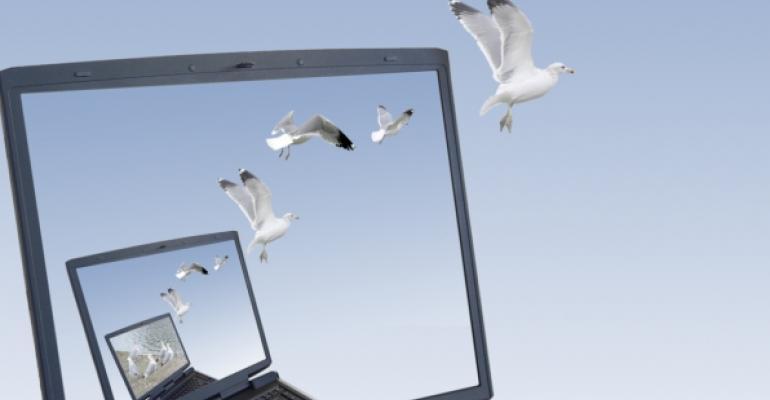 Laptop screen showing a laptop showing a laptop with birds