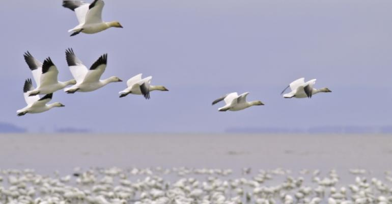white birds flying over other birds on a beach