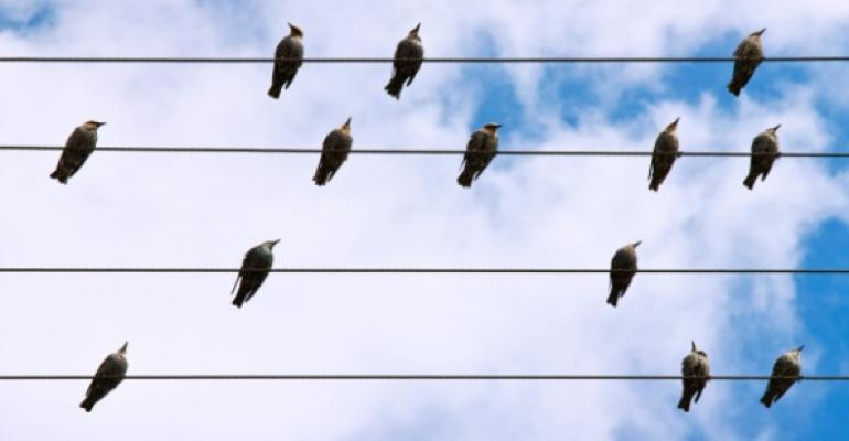 small flock of birds on electrical wires