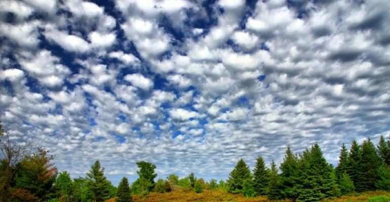 blue cloudy sky over evergreen trees