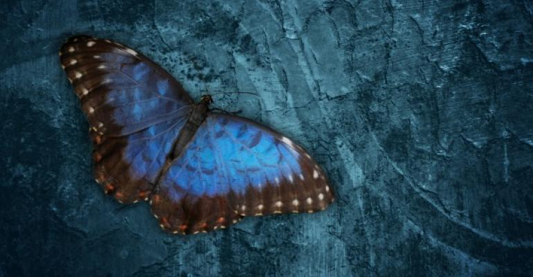 Blue and black butterfly on bluish rock background