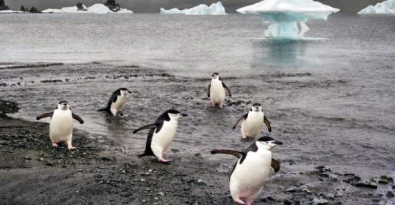 penguins on shore near water icebergs in background