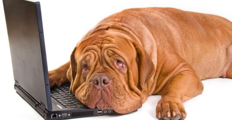brown dog laying on black laptop keyboard