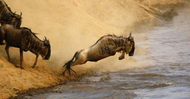Wildebeest jumping into river