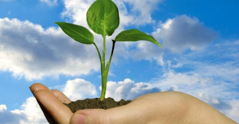 plant sprout in hand on blue sky background