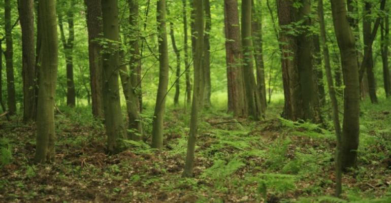 Active Directory forest