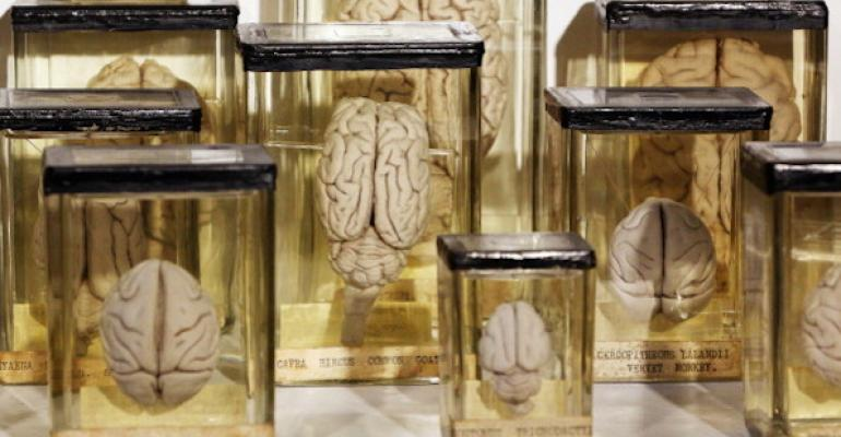 News from the Future: We'll all be growing brains in laboratories