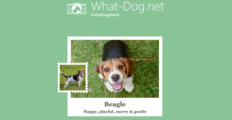 Microsoft Garage Releases Fetch! a Dog Breed Identification Service