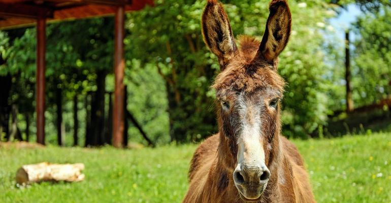 Hybrid Cloud Is More Sterile Than Mules