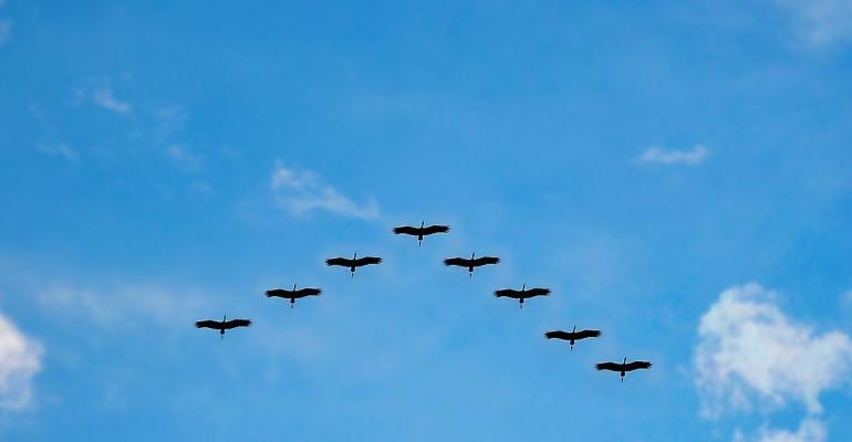 birds-2168271280.jpg
