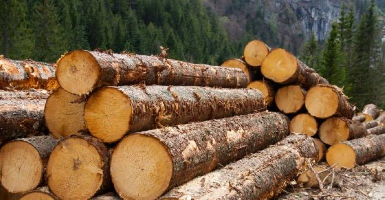 pile of logs in the mountains
