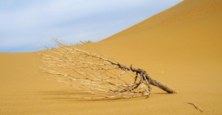 dead tree in the desert at the base of a sand dune