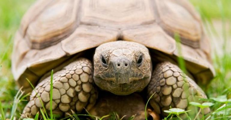 turtle represents slow sql server performance